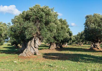 METEO Puglia: il gran caldo concede una tregua temporanea