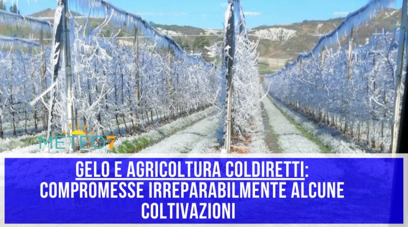 Agricoltura e Gelo COLDIRETTI compromesse irreparabilmente alcune coltivazioni