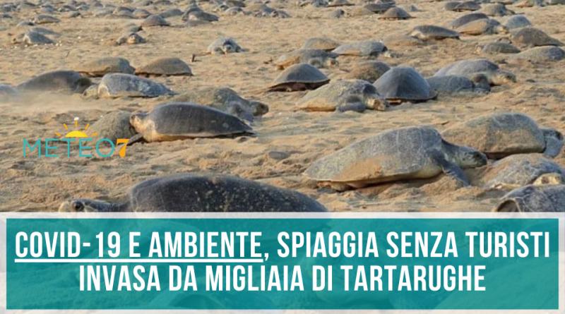 Coronavirus e AMBIENTE spiaggia senza turisti viene invasa da MIGLIAIA di tartarughe