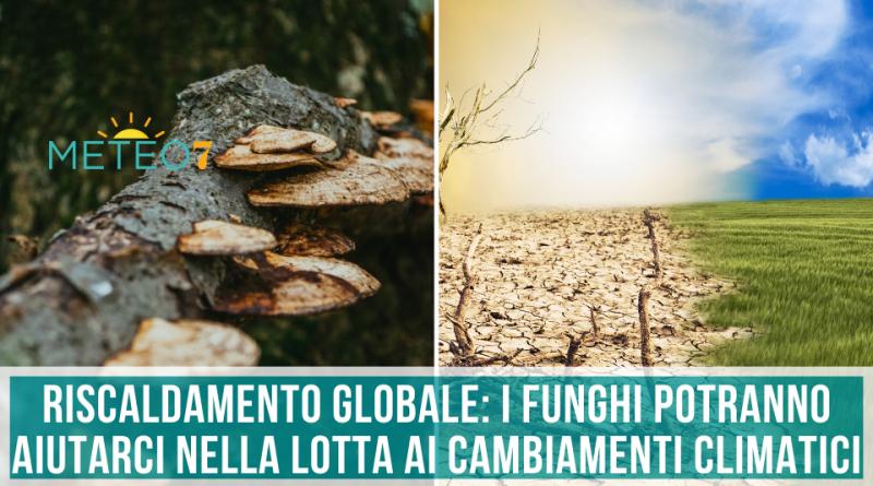 Riscaldamento Globale i funghi potranno aiutarci nella lotta ai cambiamenti climatici